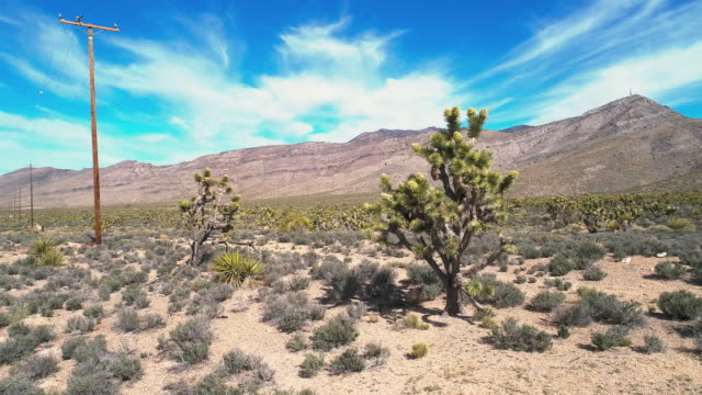 vídeos de stock e filmes b-roll de blooming joshua trees in the mojave desert during the spring in california. drone aerial video with the panning camera motion. - árvore de joshua
