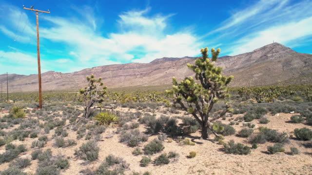 カリフォルニアの春の間にモハベ砂漠で咲くジョシュアの木。パンニングカメラの動きを伴うドローンの航空ビデオ。 - サウンドトラック点の映像素材/bロール