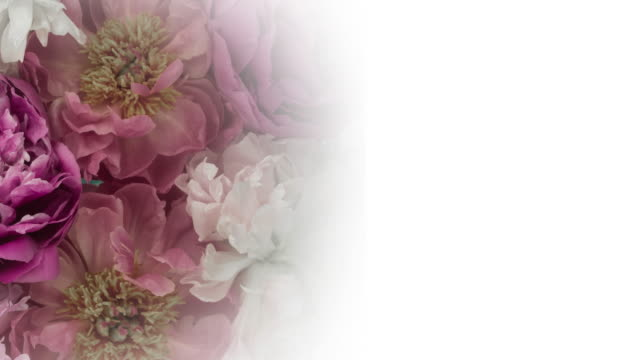 blooming peony flowers. elegant antique background with copy space. - floral pattern stock videos and b-roll footage