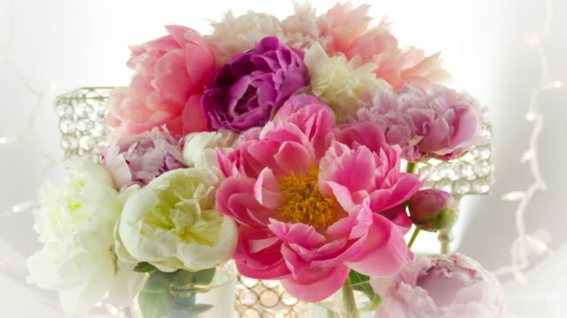 blooming peony flowers. - bunch of flowers stock videos and b-roll footage