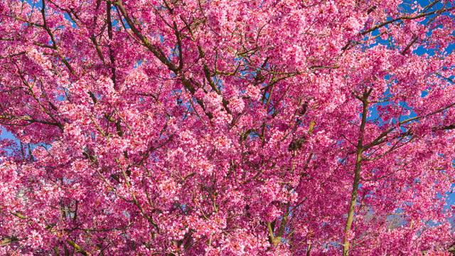 春に咲く木 - 果樹園点の映像素材/bロール