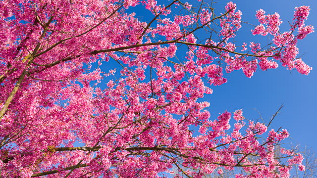 blooming tree in spring - boulevard stock videos & royalty-free footage