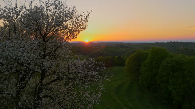 aerial blooming tree in the evening sun - prekmurje stock videos & royalty-free footage