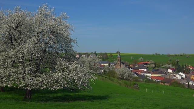 Blooming tree near Kirf, Saargau, Rhineland-Palatinate, Germany, Europe
