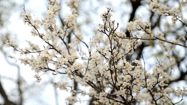 blooming tree - saturated color stock videos and b-roll footage