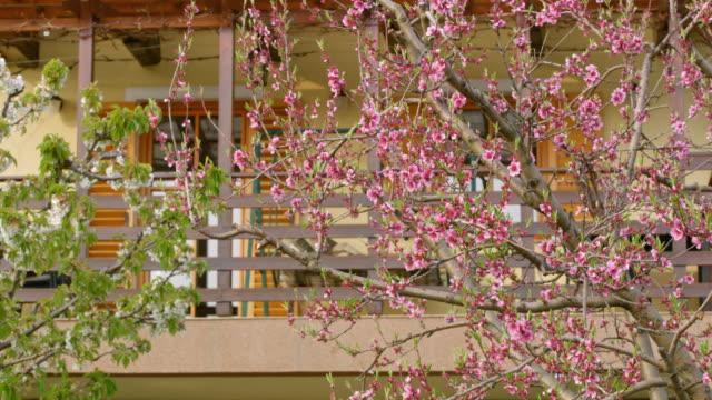 vidéos et rushes de ds arbres de floraison sur l'arrière-cour d'un chalet - plan large