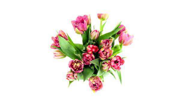 blooming tulips; time lapse - zoom in stock videos & royalty-free footage