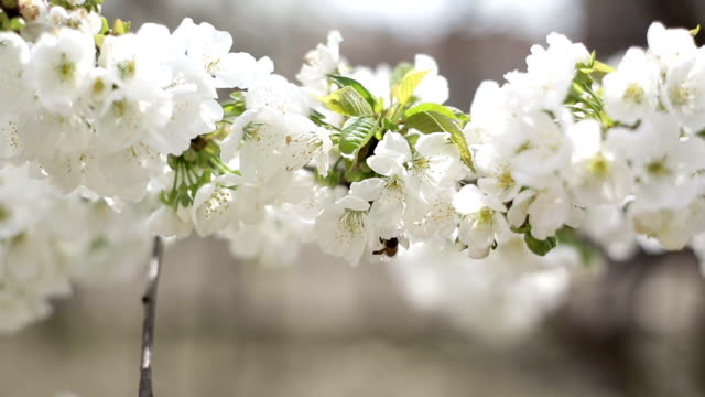 Blossom and bees