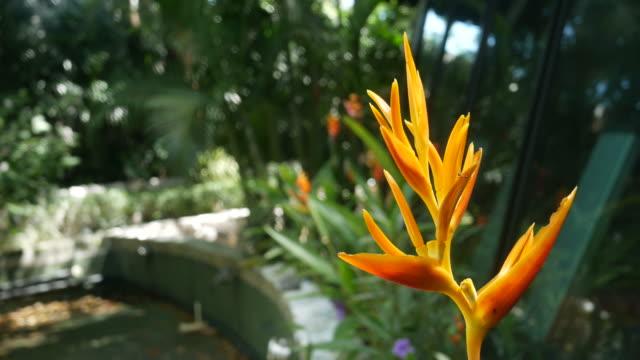 blossom flowers in tropical garden , orange Bird of Paradise