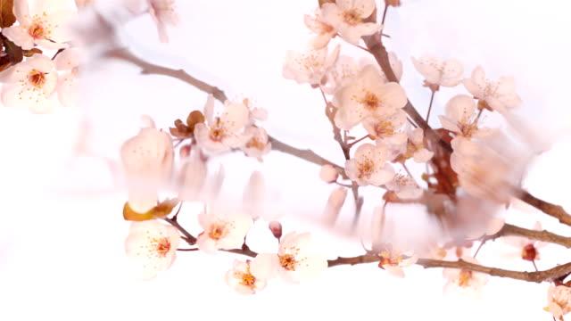 blossom in reflexion - bling bling stock-videos und b-roll-filmmaterial