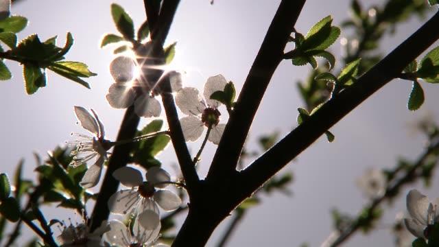 vídeos y material grabado en eventos de stock de blossoming branches - rama parte de planta