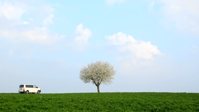 blossoming cherry tree with car in spring, bavaria, germany - volkswagen stock-videos und b-roll-filmmaterial