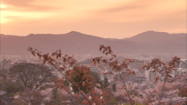 blossoming cherry trees cover a mountain overlooking the city of kyoto, japan. - kyoto prefecture stock videos & royalty-free footage