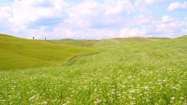 SLO, MO, blühenden Feld in der Toskana