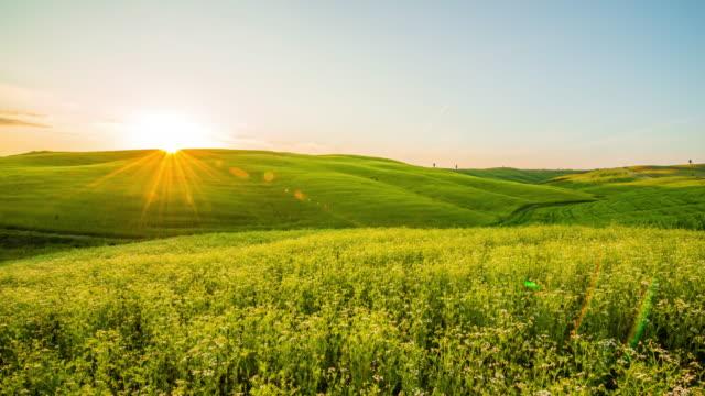 T/L bloei velden in Toscane