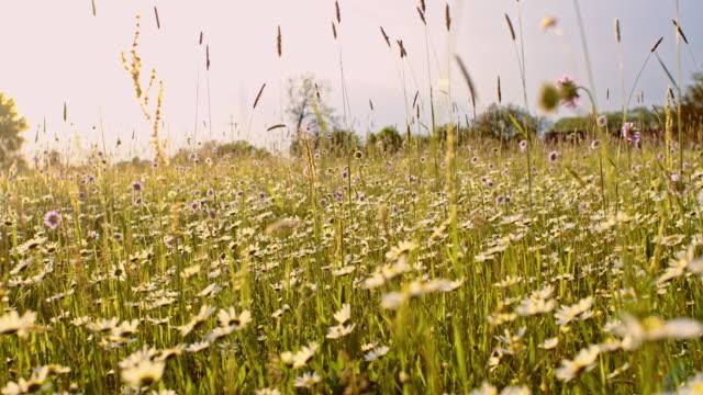 Bloeiende weide in het voorjaar