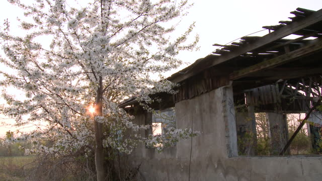 ms blossoming tree infront of abandoned building / brandenburg, germany - cold war stock videos & royalty-free footage