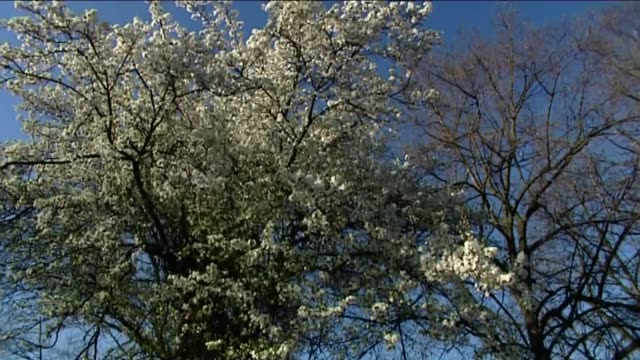 blossoming tree - 小枝点の映像素材/bロール
