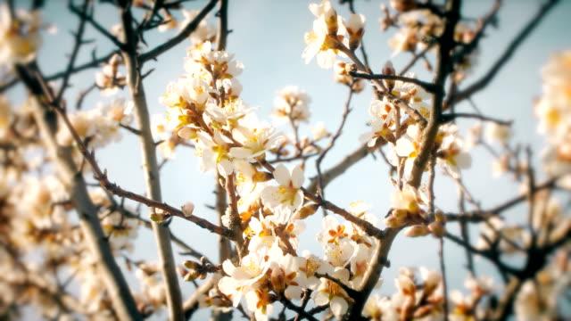 Bloeiende boom met witte bloemen