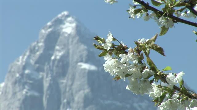 vídeos y material grabado en eventos de stock de hd: flor - punto de referencia natural