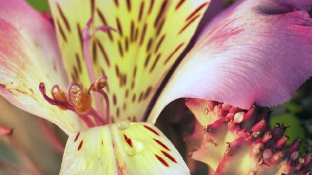 blossomkeyshift1