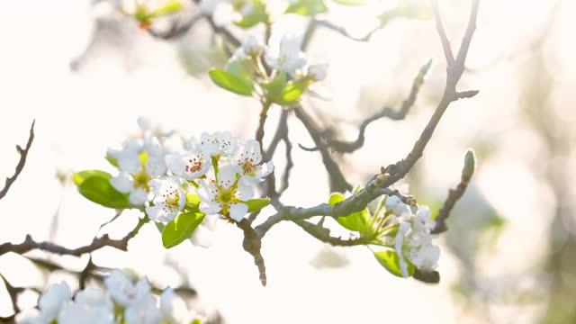 vidéos et rushes de fleurs dans la nature - branche partie d'une plante