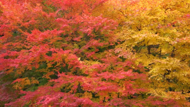 blowing autumn leaves - autumn leaf color stock videos and b-roll footage