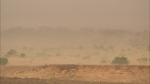 blowing dust obscures the sahara landscape. - dry stock videos & royalty-free footage