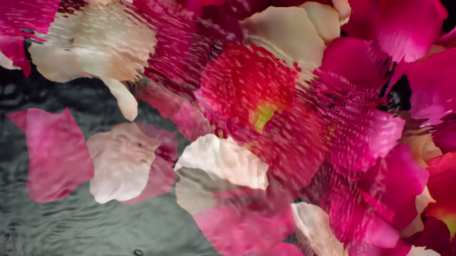 blowing off submerged pink rose petals while making slow motion movement of waves and ripples on water surface on blackbackground - rhythm stock videos and b-roll footage