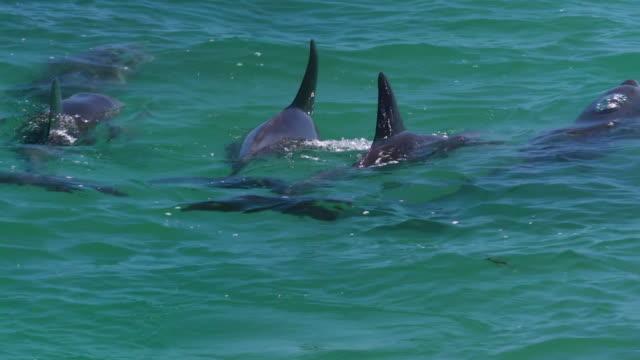 vídeos de stock, filmes e b-roll de blowing out from a blowhole - cetáceo