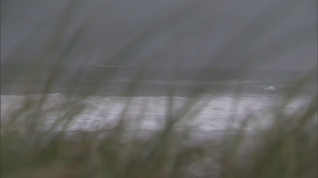 blowing sea grass frames crashing waves. - reed grass family stock videos & royalty-free footage