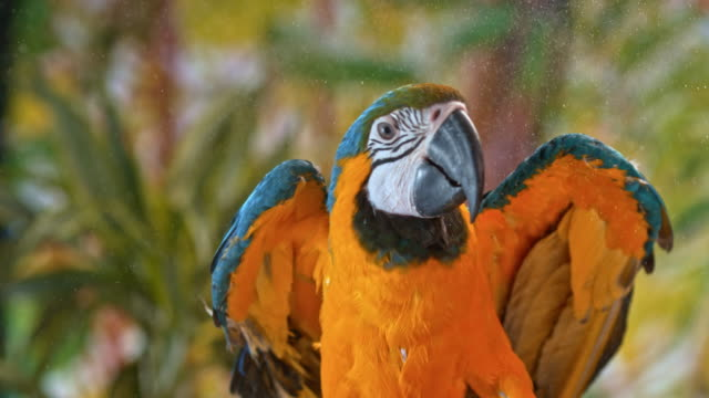 blue and yellow macaw flying off a branch - animal wing stock videos & royalty-free footage