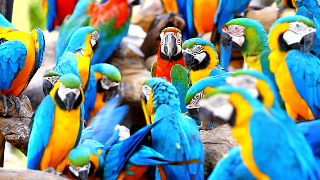 blue and yellow macaw - scarlet macaw stock videos and b-roll footage