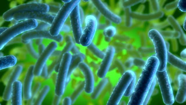 vídeos y material grabado en eventos de stock de bacterias azul - bacteria