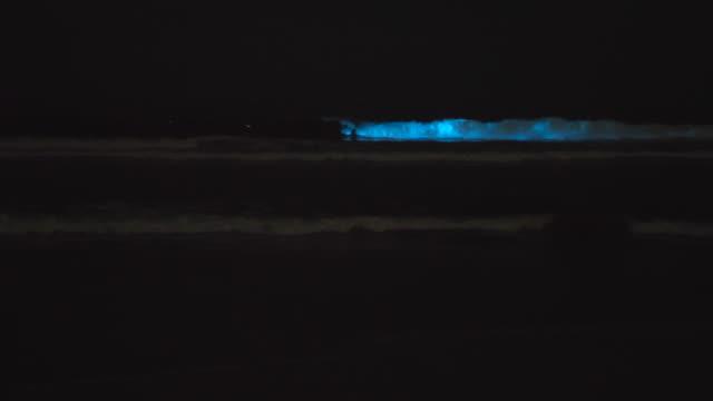 blue bioluminescent waves ocean sea caused by red tide algae plankton. - algae stock videos & royalty-free footage