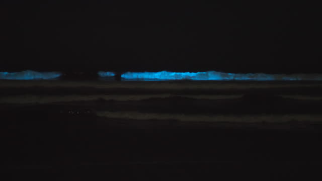 blue bioluminescent waves ocean sea caused by red tide algae plankton. - プランクトン点の映像素材/bロール