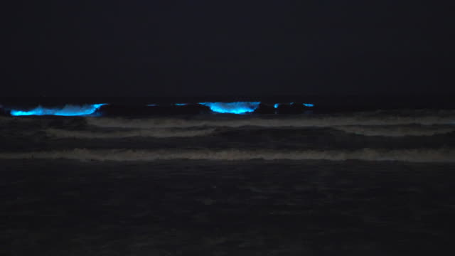blue bioluminescent waves ocean sea caused by red tide algae plankton. - wisdom stock videos & royalty-free footage