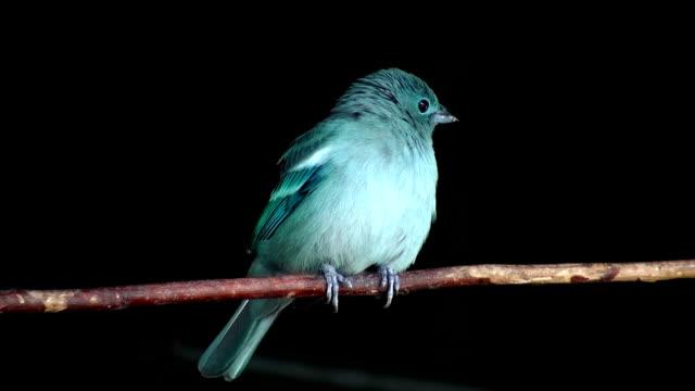 ブルーバード - 動物の翼点の映像素材/bロール