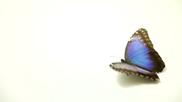 blue butterfly - butterfly stock videos & royalty-free footage