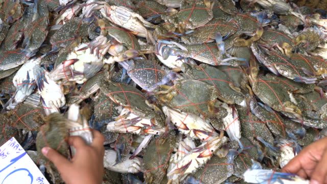 blue crab in the market - crab stock videos and b-roll footage