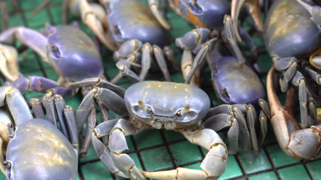 blue crabs in captivity - animals in captivity stock videos & royalty-free footage
