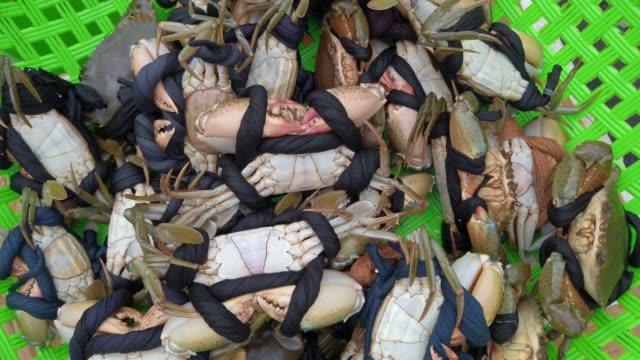vidéos et rushes de crabes bleus, crabes jaunes, crabes à vendre à quang ninh , vietnam - mouillé