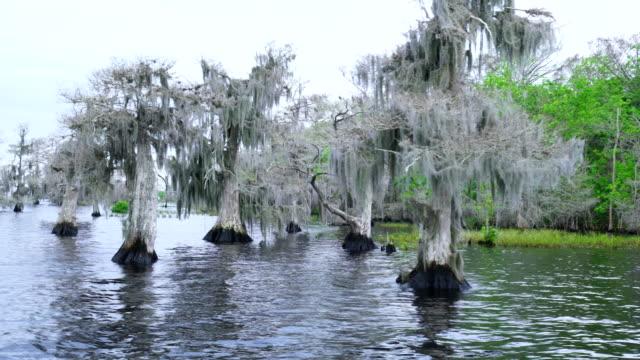 blue cypress lake, florida, usa, america - epiphyte stock videos & royalty-free footage