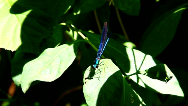 Blue Libelle auf den Wald ängstliche von buterfly!