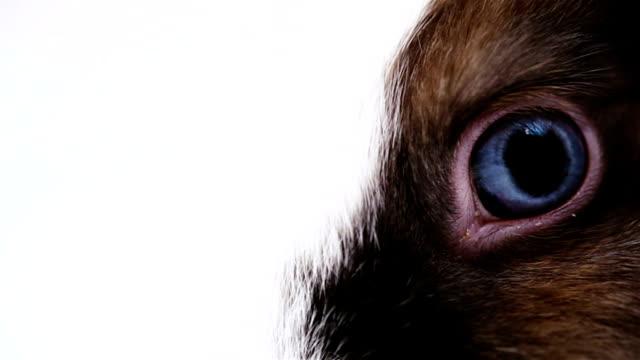 Blaues Auge des merkwürdig anmuten