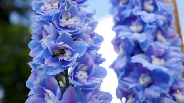 blue flower swing on field - full hd format stock videos & royalty-free footage