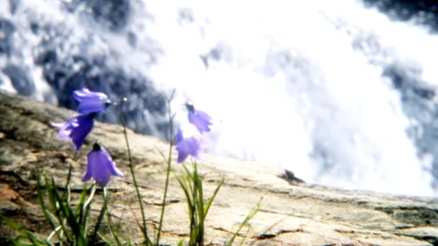 blue flowers - spring flowing water stock videos & royalty-free footage