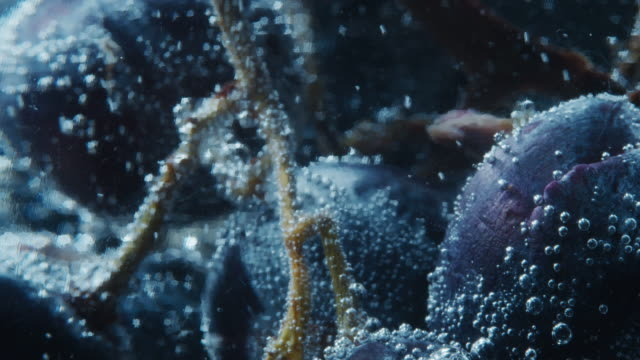 blue grapes in soda water. extreme close-up - plum stock videos & royalty-free footage