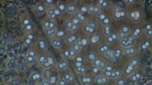blue green algae - fotosintesi video stock e b–roll