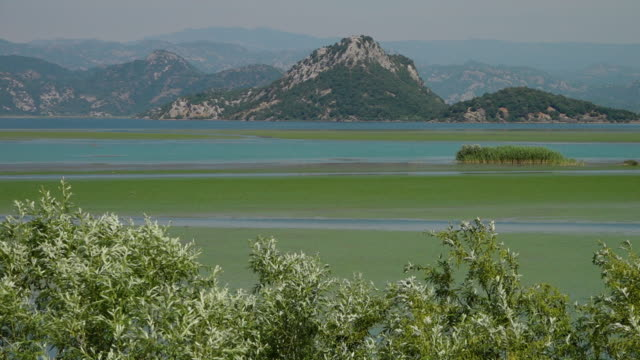 blue green algae water with bushes and mountains - uneven stock videos & royalty-free footage